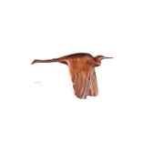 lasterne les oiseaux en vovodu heron 60 cm bhe060 1