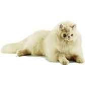 anima peluche chat persan couche ecru 50 cm 5010