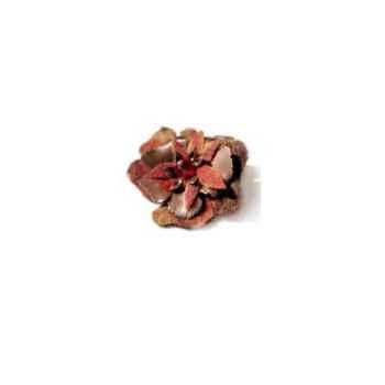 Joyaux de la couronne-Broche fleur capiteux-piflecap