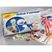 anatomie joustra 41605