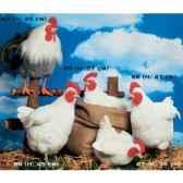 automate poule blanche picorant automate decoration noe67