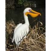 peluche pelican 35cmht anima 2942
