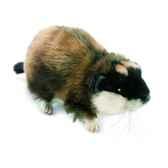 anima peluche cochon d inde 16 cm 4707