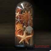 collection d etoiles de mer objet de curiosite an083