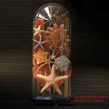 Collection d'étoiles de mer Objet de Curiosité -AN083