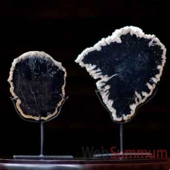 Tranche d'ébène fossile Objet de Curiosité -FO012
