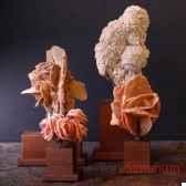 collection de roses des sables objet de curiosite mi025