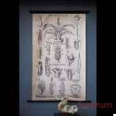 planche botanique 1905 objet de curiosite ta088
