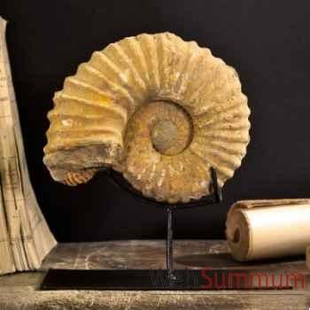 Ammonite Objet de Curiosité -AN004BIS