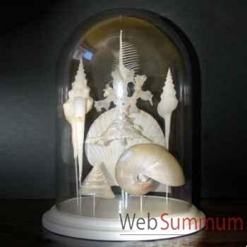 Collection de coquillages blancs Objet de Curiosité -AN084