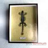 gekko volant objet de curiosite an049