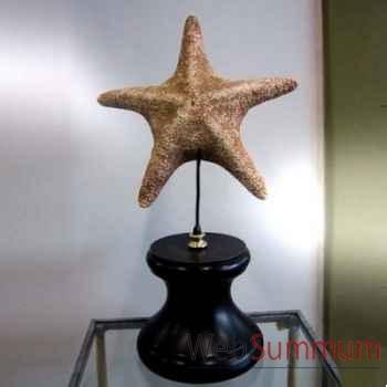 Etoile de mer Objet de Curiosité -AN006