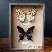 boite de 2 papillons de thailande objet de curiosite in030