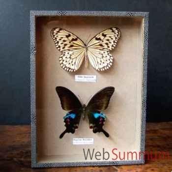 Boite de 2 papillons de thaïlande Objet de Curiosité -IN030