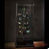 papillons verts objet de curiosite in044