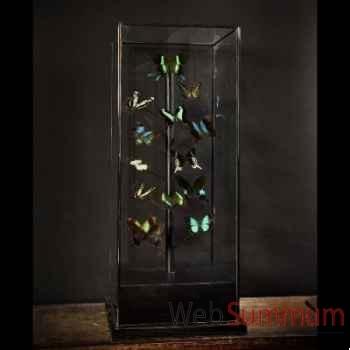 Papillons verts Objet de Curiosité -IN044