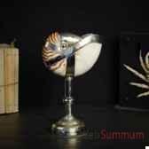 nautile habille d argent objet de curiosite an025