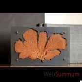 gorgone rouge objet de curiosite ve020