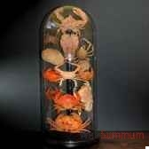 collection de crabes objet de curiosite an082