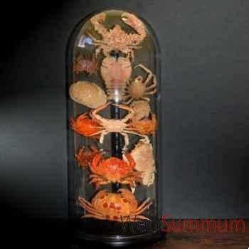 Collection de crabes Objet de Curiosité -AN082