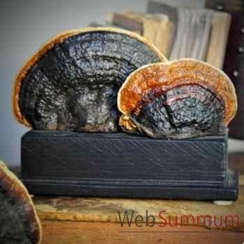Champignon amadouvier Objet de Curiosité -VE025