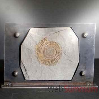 Ammonite noire Objet de Curiosité -FO001