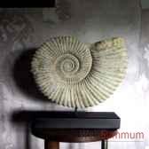 grosse ammonite objet de curiosite an009