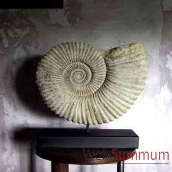 Grosse ammonite Objet de Curiosité -AN009