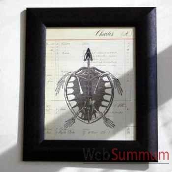 Tableau squelette tortue Objet de Curiosité -TA035