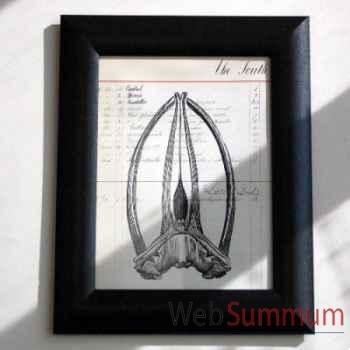 Tableau squelette de baleine Objet de Curiosité -TA036
