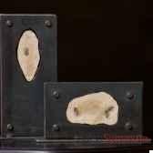 larves de libellule fossiles objet de curiosite fo009
