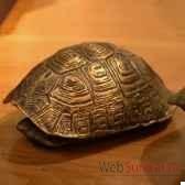 tortue en laiton objet de curiosite dl082
