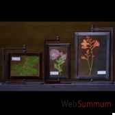 herbier double face set de 3 objet de curiosite da078