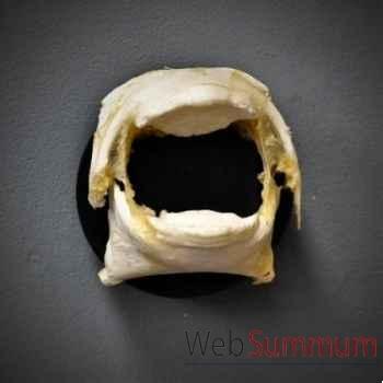 Machoires de poisson diodon Objet de Curiosité -AN105
