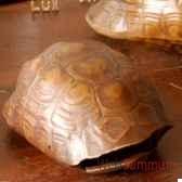 tortue realiste objet de curiosite an056