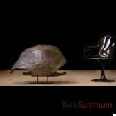 tortue geante d aldabra objet de curiosite pu267socle