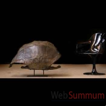 Tortue géante d'aldabra Objet de Curiosité -PU267SOCLE