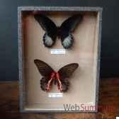 boite 2 papillons objet de curiosite in032