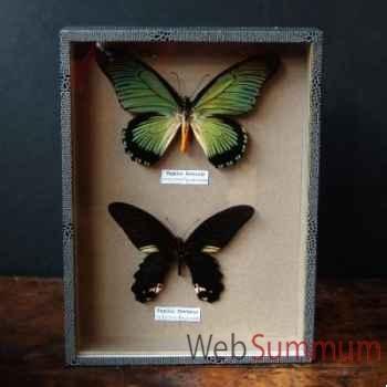 Boite 2 papillons (zalmoxis) Objet de Curiosité -IN031