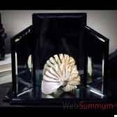 triptyque de presentation objet de curiosite da141