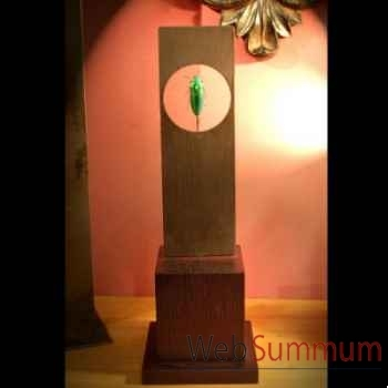 Chrysochroma rajah Objet de Curiosité -IN020