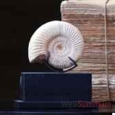 ammonite blanche objet de curiosite fo011