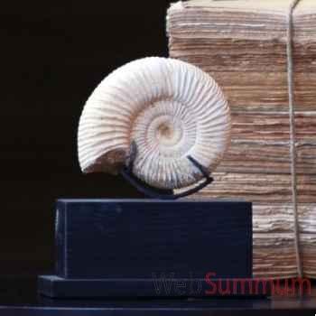 Ammonite blanche Objet de Curiosité -FO011