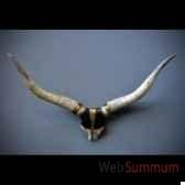 trophee de watusi du nigeria gm objet de curiosite an133
