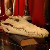 crane de crocodile objet de curiosite an060