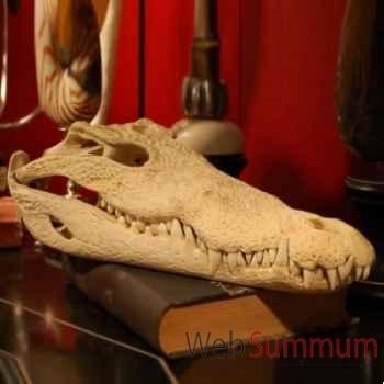 Crâne de crocodile Objet de Curiosité -AN060