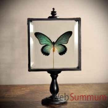 Papillon zalmoxis Objet de Curiosité -IN043