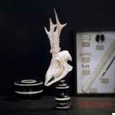 crane de chevreuiblanchi objet de curiosite an154