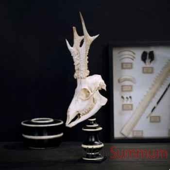 Crane de chevreuil blanchi Objet de Curiosité -AN154