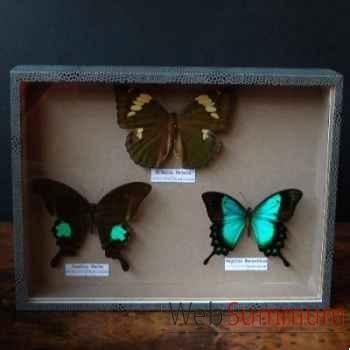 Boite 3 papillons Objet de Curiosité -IN028